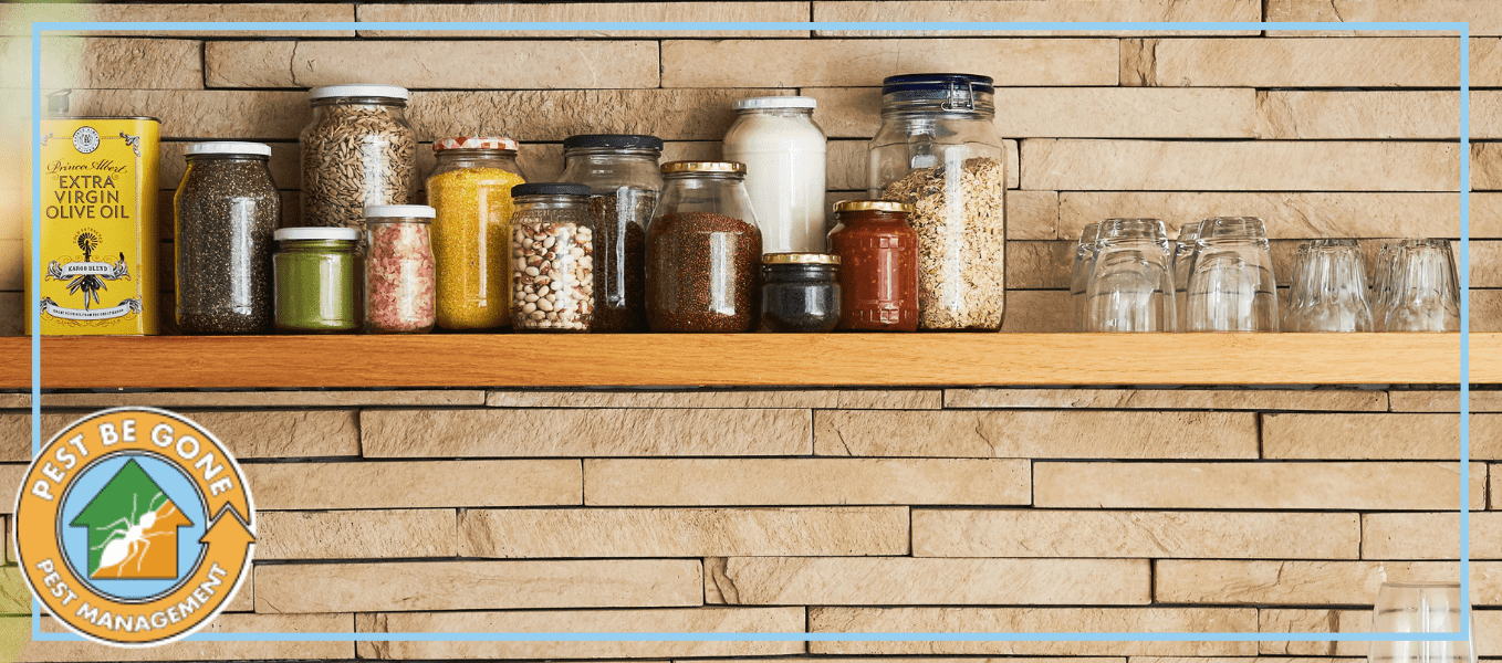 Everything You Need to Know About Pantry Pests